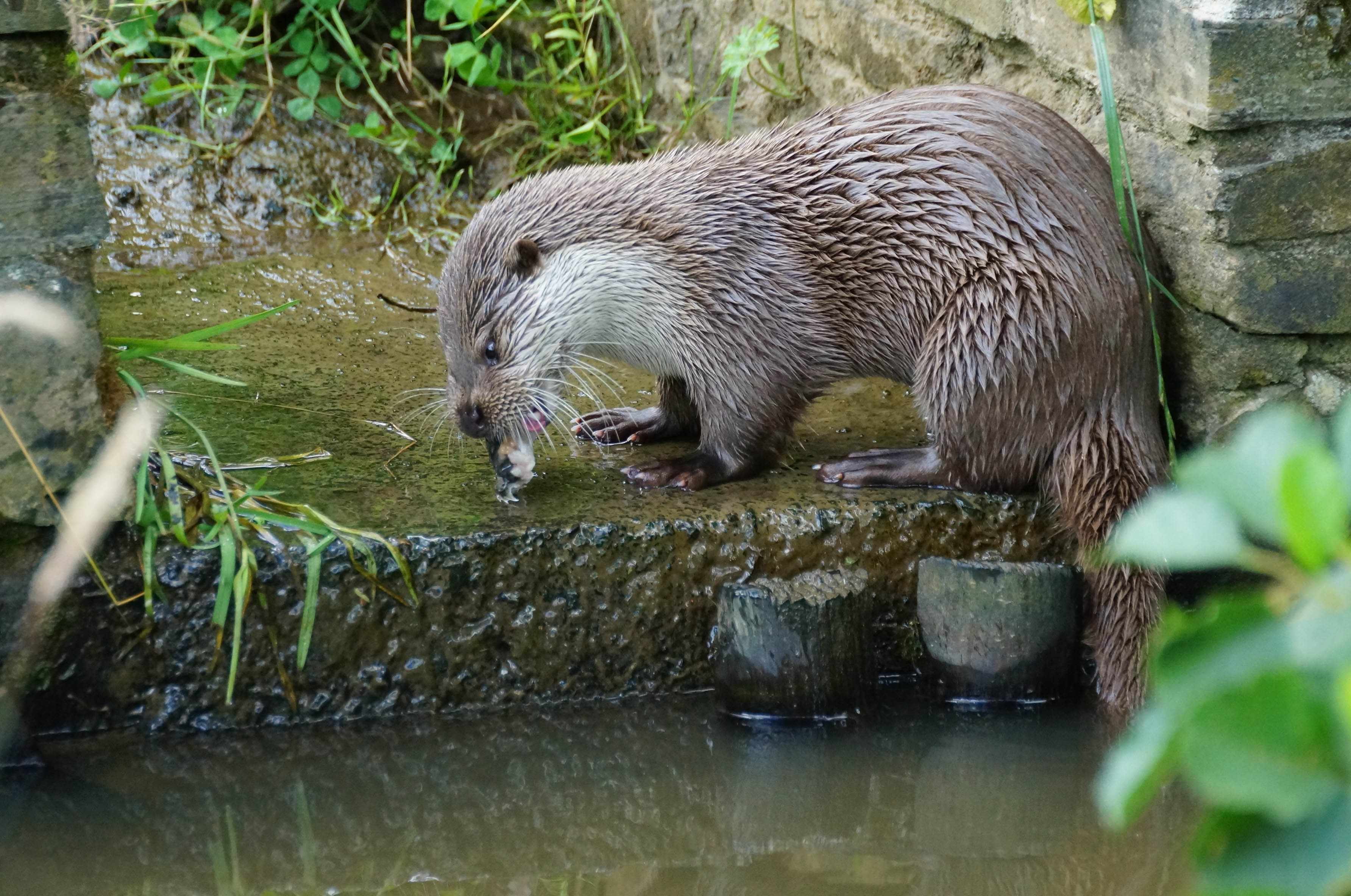 uk wild otter trust welcome