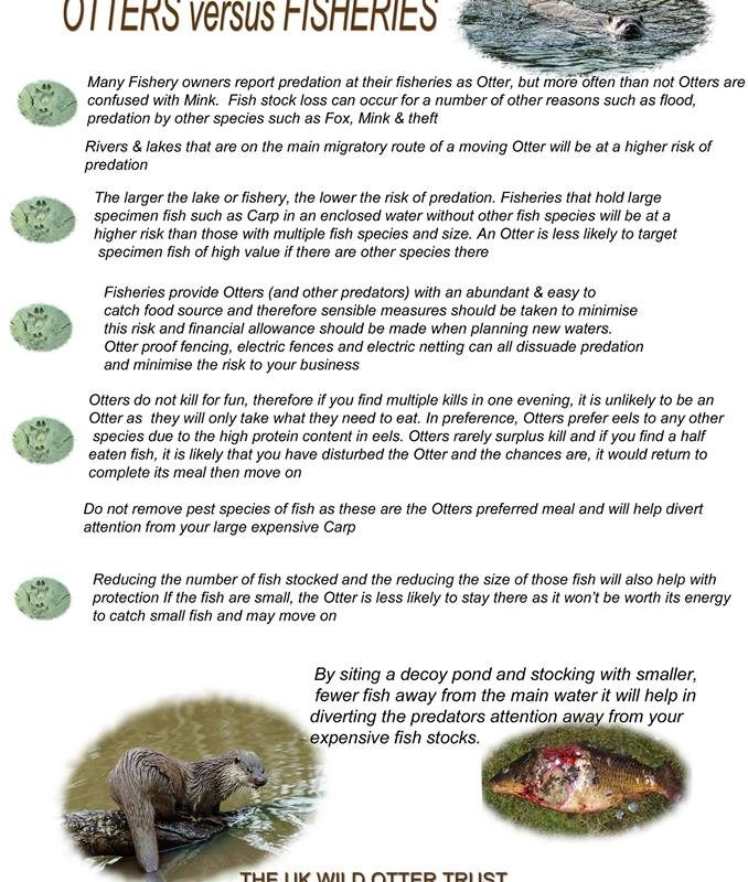 Rules of predating on wild
